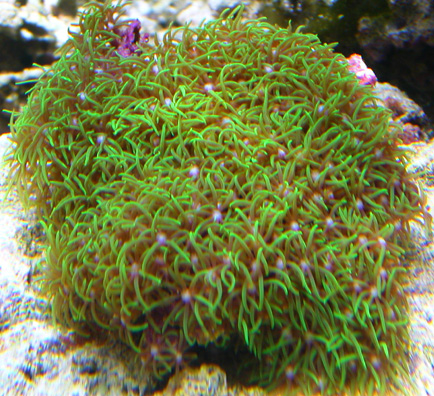 we also added this mat of star polyps it 39 s hard to get the colors